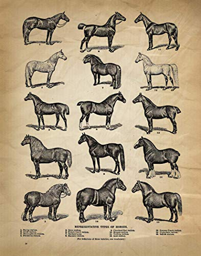 Horse Print | All The Different Type of Horses | 11 x 14 | Western Decor