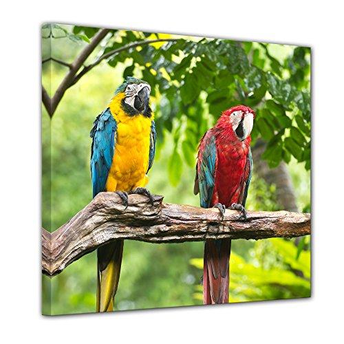 Bilderdepot24 Bild auf Leinwand   Macaw Papageien in 80x80 cm als Wandbild   Wand-deko Dekoration Wohnung modern Bilder   200728