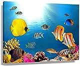 Cuadros Decoracion Coloridos Poster de acuario de peces oceánicos pinturas de Decoracion artística obras de arte contemporáneas vista en lienzo Cuadros decorativa de decoración40x60cm x1 Sin Marco