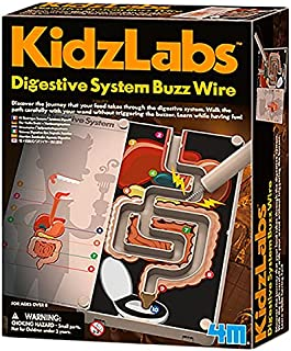 4M Digestive System Buzz Wire - Multi Color