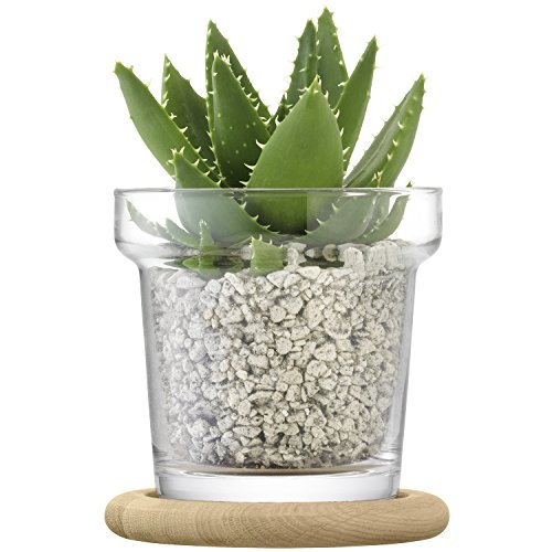LSA PN02 Plant Pot & Oak Base H16.5 cm Clear *