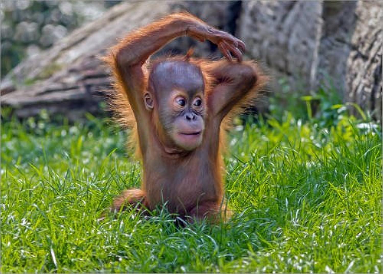 wholesape barato Posterlounge Lienzo 80 80 80 x 60 cm  Baby Animals de WildlifePhotography - Cuadro Terminado, Cuadro sobre Bastidor, lámina terminada sobre Lienzo auténtico, impresión en Lienzo  tiempo libre