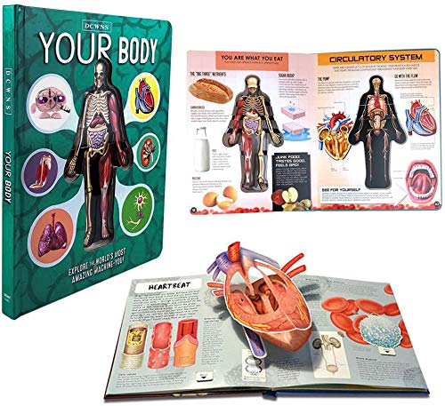 Yimixz Anatomy of The Human Body in English Popular Science Book 3D Picture Book Early Education Book for Kid (3D Book Random Color)