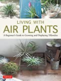 Living with Air Plants: A Beginner's Guide to Growing and Displaying Tillandsia