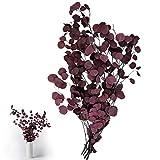Sporgo - Flores secas de eucalipto auténticas, eucalipto secas, ramo de flores secas de a...