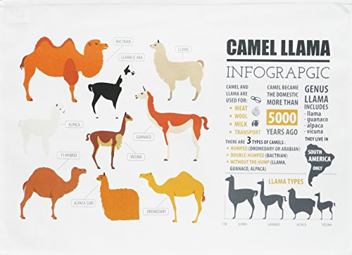 Camel and Llama Infographic - Large Cotton Tea Towel by Half a Donkey