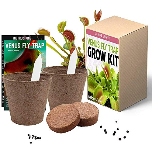 Venus Fly Trap Seeds Growing Kit  All in One Carnivorous Plant Growing Kit Gift Grow Your Own Dionaea Muscipula
