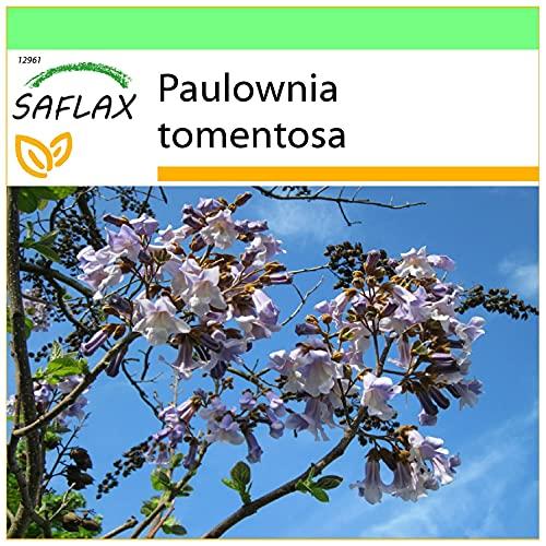 SAFLAX - Albero della principessa - 200 semi - Paulownia tomentosa