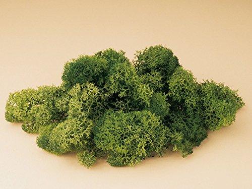 Auhagen 76.651,0 - Musgo de Islandia, 50 g, Verde