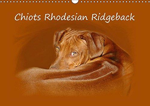 Chiots Rhodesian Ridgeback (Calendrier mural 2018 DIN A3 horizontal): Photographies de chiots de Rhodesian Ridgebacks en Afrique du Sud. (Calendrier ... 01, 2017] van Wyk - www. germanpix. net, Anke