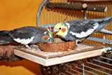 Sitzbrett mit Kokosschale Futternapf zum Herausnehmen - 4