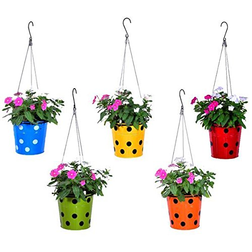 TrustBasket Dotted Round Planter with Hanging Wire Rope (Multicolour)