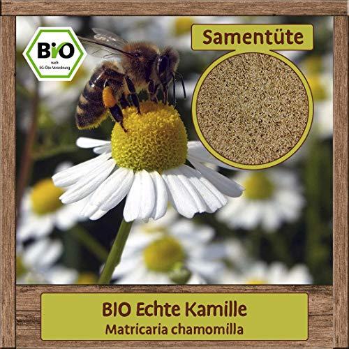 BIO Echte Kamille Samen Kräutersamen (Matricaria chamomilla) Blumensamen Bienenpflanze mit essbare Blüten
