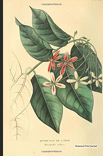 Botanical Print Journal: quisqualis indica, 6