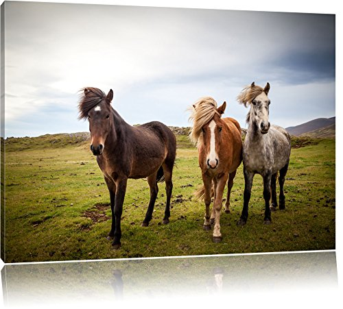 Drei wilde Islandpferde, Format: 60x40 auf Leinwand, XXL riesige Bilder fertig gerahmt mit Keilrahmen, Kunstdruck auf Wandbild mit Rahmen, günstiger als Gemälde oder...
