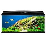 Ciano BLACK Aqua 80 LED Tropical Glass Aquarium - Includes Filter, Lights