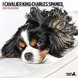 Magnet & Steel Cavalier King Charles Spaniel 2021 Moderner Kalender