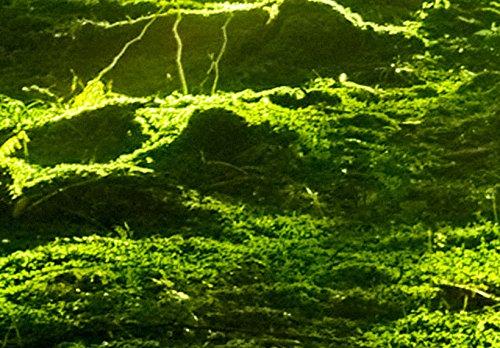 SENSATIONSPREIS ! Bilder 200×100 cm – Wasserfester Leinwanddruck ! XXL Format – Fertig Aufgespannt TOP Vlies Leinwand Wandbild 5 Teilig Landschaft Wald 030213-32 200×100 cm B&D XXL - 3