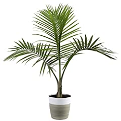 The Majesty Palm's lush, dark green foliage works well with most color schemes, and the palm's classic texture allows it to naturally fit in most home-decor styles Use palms to break up a section of blank wall, to fill an empty corner, to soften the ...