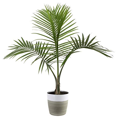 Popular Live Indoor House Plants