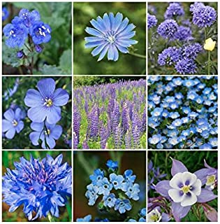 Blue Mixed Wildflower Seed - Annuals and Perennials, Sun and Limited Shade