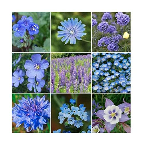 Shade Flowers Perennial Blue Amazon