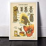 HHXXDO Vintage Antike Bienen Drucke Natürliche Poster