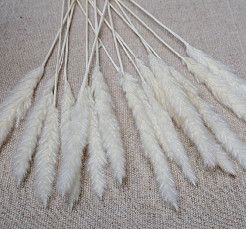 Getrocknetes Pampasgras | 60cm weiß - 5