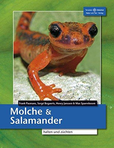 Molche und Salamander: halten und züchten