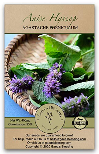 Gaea's Blessing Seeds – Anise Hyssop Herb 1000+ Seeds Non-GMO Seeds with Easy to Follow Planting Instructions – Open-Pollinated Heirloom High Germination Rate 96% Germination Rate 400mg