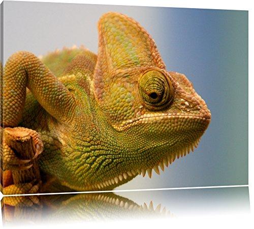 geel kameleonFoto Canvas   Maat: 60x40 cm   Wanddecoraties   Kunstdruk   Volledig gemonteerd