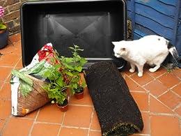 Cat Craft Projects: Wheat Grass Cat Garden