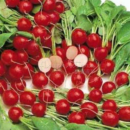 400 Graines Cherry Belle Radis (23 jours) ASA LAURÉAT frais Paquet ~ HEA
