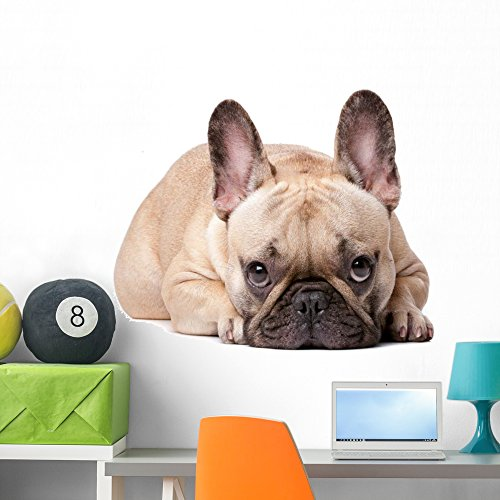 Wallmonkeys French Bulldog Wall Decal Peel and Stick Graphic (36 in W x 24 in H) WM318599
