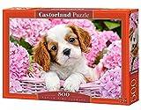 Castorland - B-52233 - Puzzle - Chiot dans Fleurs Roses - 500 Pièces