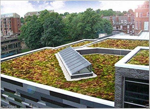 200 Graines Sedum graines toit Garden- Couleurs Beautiful Mix - verts, jaunes, rouges et violettes!