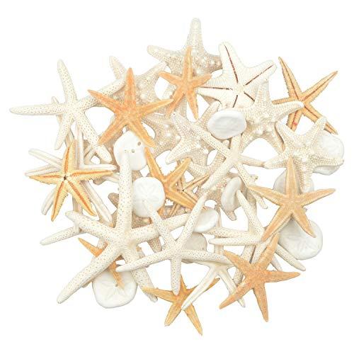 Jangostor 2-6 Inch 30 PCS Starfish10 PCS Sand Dollars Mixed Ocean Beach Starfish-Natural Colorful Seashells Starfish Perfect for Wedding Decor Beach Theme Party, Home Decorations,DIY Crafts, Fish Tank