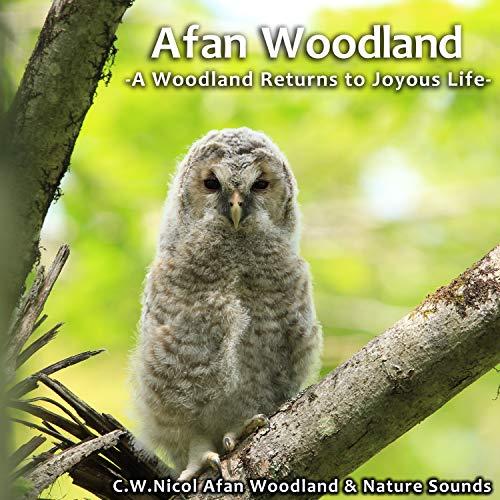 Afan Woodland -A Woodland Returns to Joyous Life-