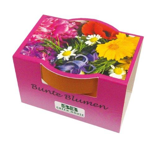 10er Set Minipflanzset Bunte Blumen