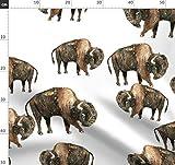 Büffel, Bison, Tara Put, Indianer, Ureinwohner, Kanada