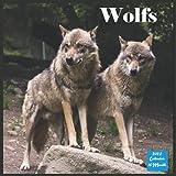 Wolfs Calendar 2022: Official Wolf Animal Calendar 2022, 16 Month Square Calendar