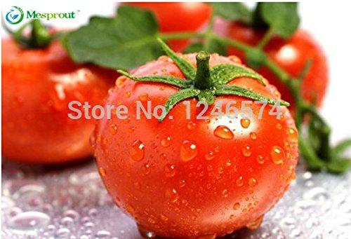 Big 30pcs de promotion / sac rouge semences graines de légumes tomate poire tomate Bonsai non-GM aliments biologiques pour Freeshipping maison de jardin Bricolage