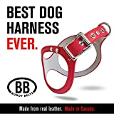 durable buddy belt classic leather dog harness in various sizes and colors