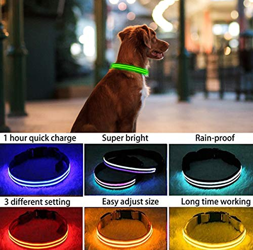 PPWW Light Up LED Dog Collar - Super Bright - USB Rechargeable, Rainproof - Perfect Use in Rainy Day Small, Green