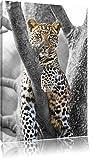 maiestätischer Leopard auf Baum schwarz/weiß auf