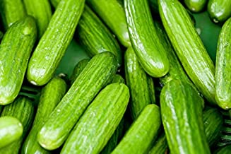 Persian Beit Alpha Cucumber Seeds, NON-GMO, Variety Sizes,