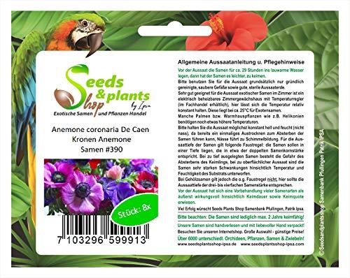 8 coronas de anémona coronaria de Caen semillas de flor del jardín...