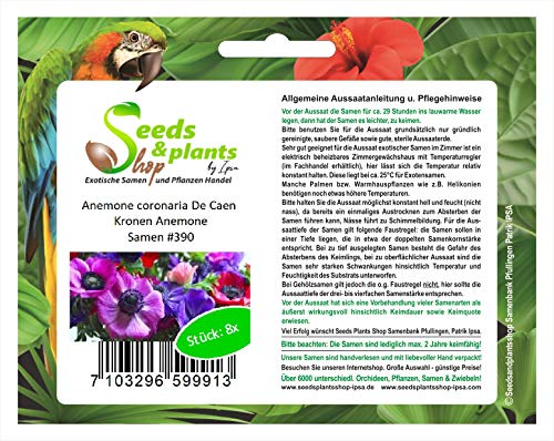 Stk - 8x Anemone coronaria De Caen Kronen Pflanzen - Samen #390 - Seeds Plants Shop Samenbank Pfullingen Patrik Ipsa