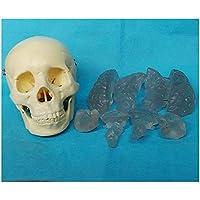 人間の頭蓋骨の脳モデル-取り外し可能な頭蓋骨キャップを備えた医療解剖学的頭蓋骨モデル-解剖学人間の頭蓋骨モデル-科学教室研究用ディスプレイ医療教育モデル