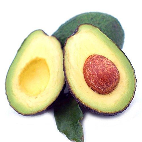 CFPacrobaticS 10 Piezas De Semillas De Aguacate Fruta Verde Persea Americana De Fácil Crecimiento, Plantas De Patio De La Granja Casera, Regalos De Jardín De Decoración Semillas de aguacate